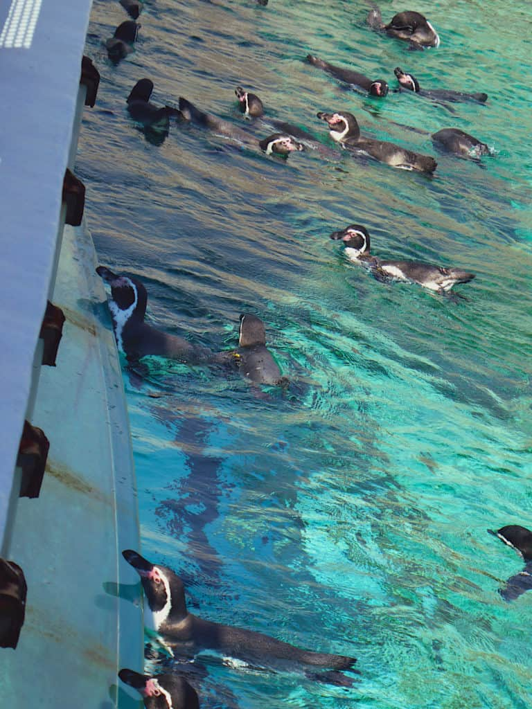 Penguins Sea Life Park